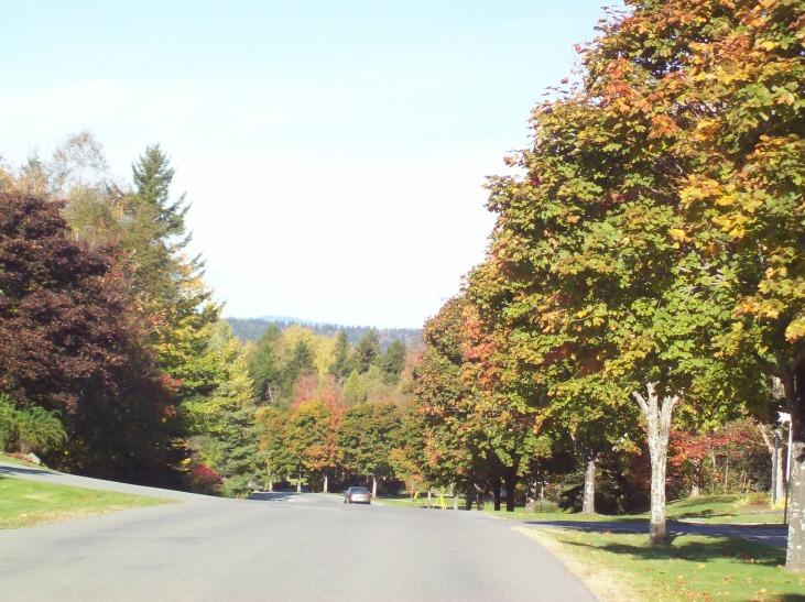 Rothesay Autumn Trees