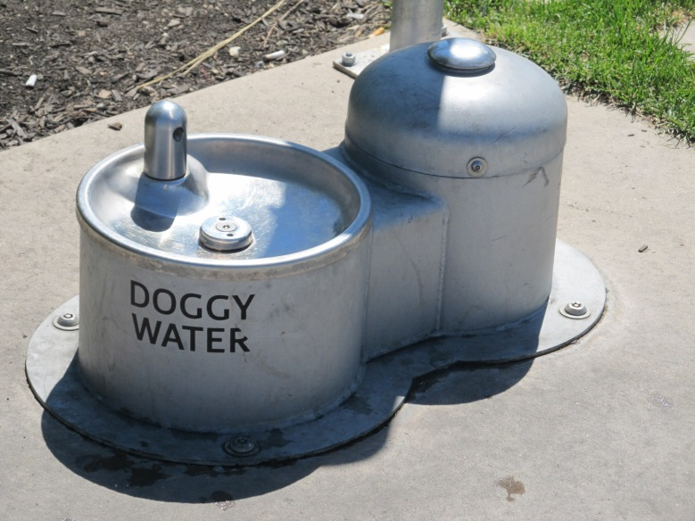 Kelowna Dog water station