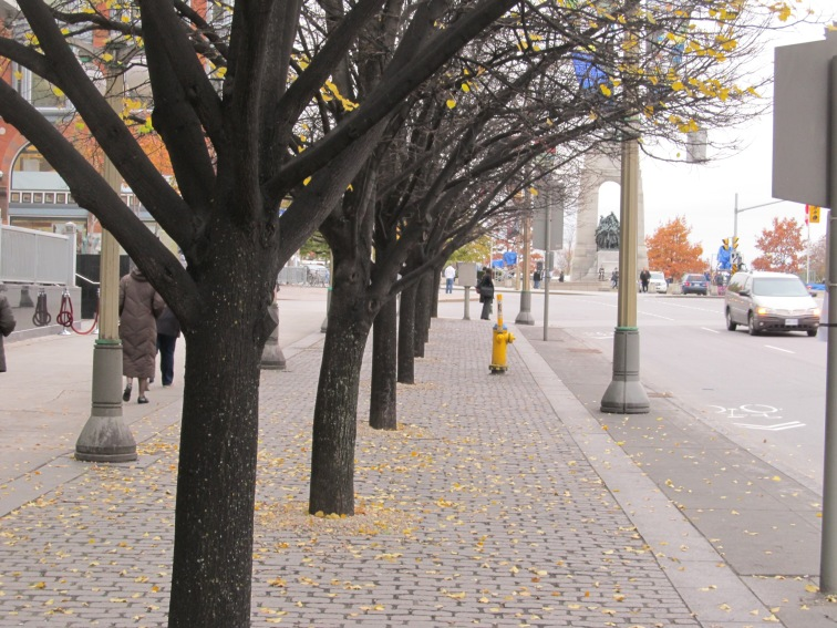Ottawa permeable sidewalk and trees