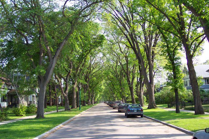Tree Canada photo