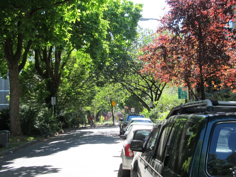 Vancouver treed street