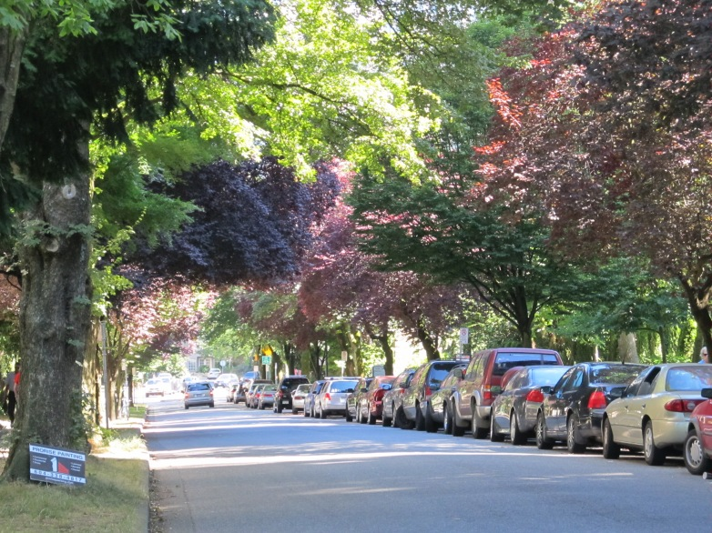 Vancouver tree canopy