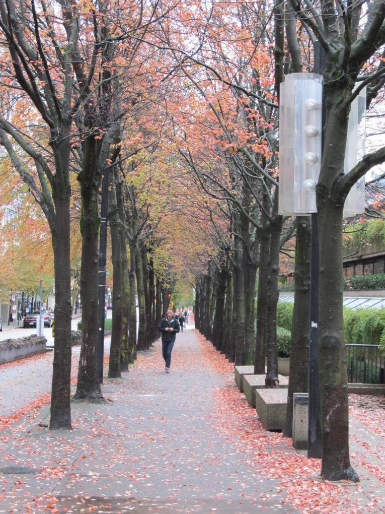 Vancouver tree lined sidewalk